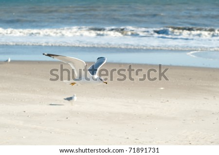 seagull flying at the beach - stock photo