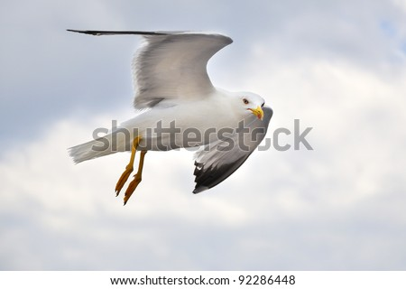seagull flying, croatia - stock photo
