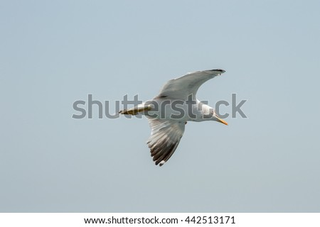 Seagull flying freely upon the sea - stock photo