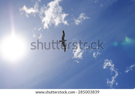Seagull flying high with wide spread wings towards light against a blue sky, inspirational concept of freedom and aspiration, shot from low-angle