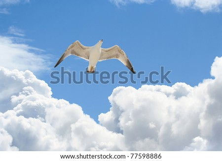 seagull flying in a blue sky with beautifull clouds - stock photo