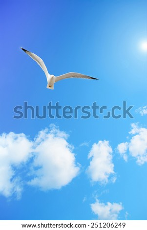 seagull flying in a blue sky with white, soft clouds under the sun - stock photo