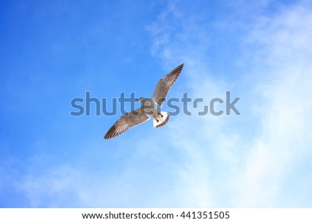 Seagull flying in sky.