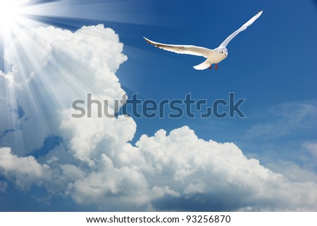 Seagull flying in sky - stock photo