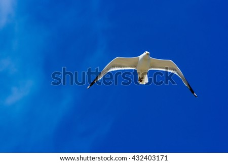 Seagull flying in the sky, lake Baikal