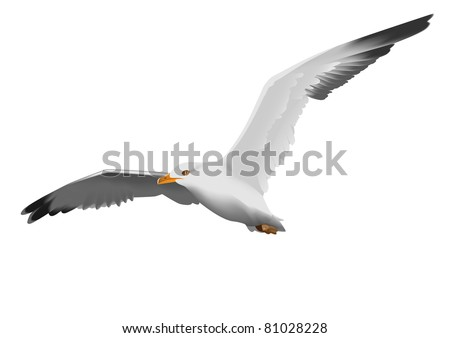 Seagull, flying in the sky with my wings - stock photo