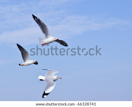 Seagull flying on beautiful blue sky and cloud - stock photo