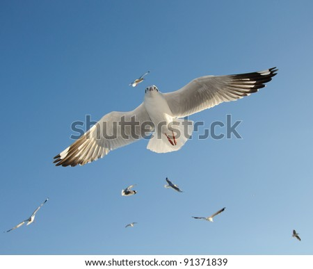 seagull flying on blue sky - stock photo