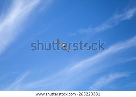 Seagull flying on blue sky background with windy clouds - stock photo