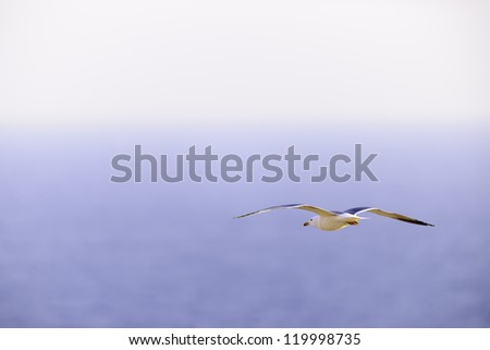 seagull flying over Atlantic Ocean with copy space, Espichel Cape, Setubal, Portugal - stock photo
