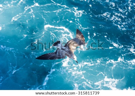 Seagull flying over ferry trail on the sea surface - stock photo