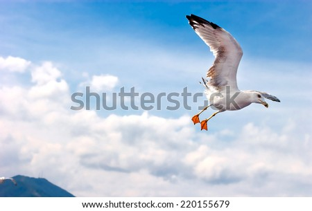 Seagull flying over sea - stock photo