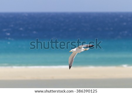 seagull flying over the beach - stock photo