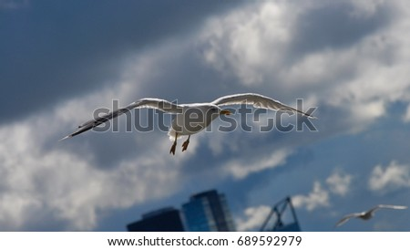 Seagull flying over the city of Tallinn, Estonia in a summer day