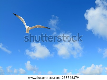 seagull flying under a blue sky with clouds - stock photo
