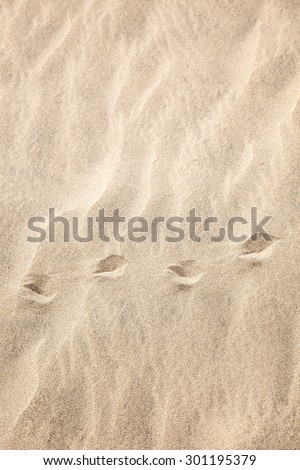 Seagull footprints in the sand in dunes