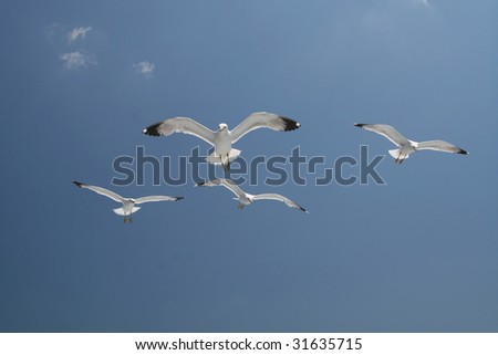 Seagull group flying