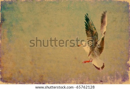seagull grunge background with plenty of copy space - stock photo