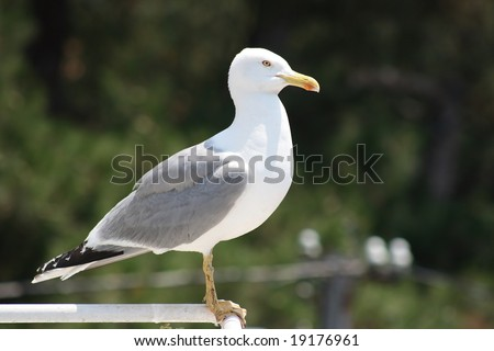 seagull has landed - stock photo
