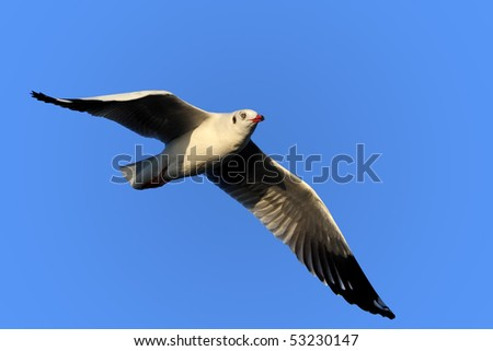 Seagull in blue sky - stock photo