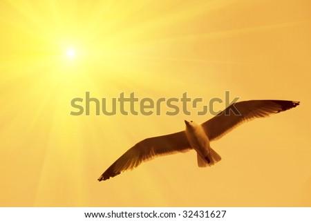 Seagull in flight. - stock photo