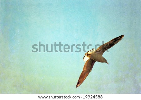 seagull in flight and plenty of space for text - stock photo