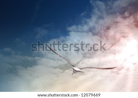 seagull in flight at the sunset - stock photo