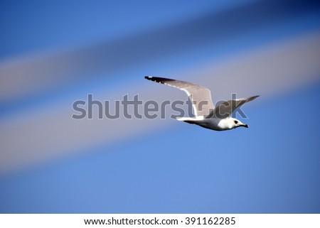 Seagull in Marina - stock photo