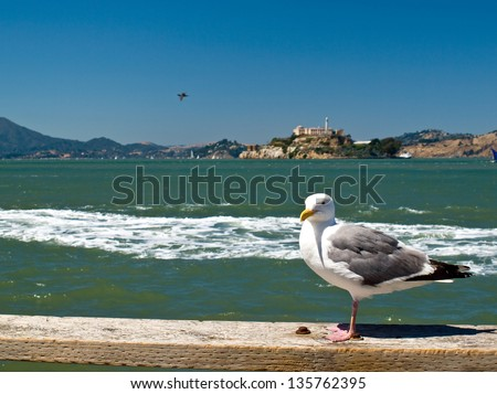 Seagull in San Francisco at Pier 39 with Alcatraz Prison in the Background - stock photo
