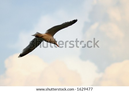Seagull in the Clouds - stock photo