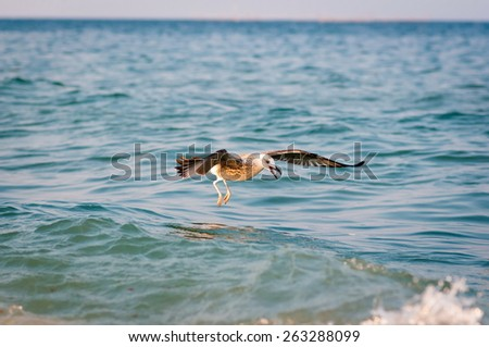Seagull in the fight for food - stock photo