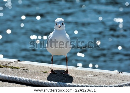 Seagull in the harbor - stock photo