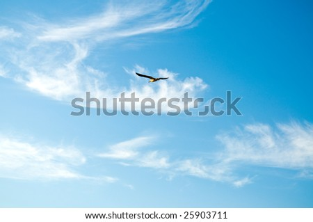 Seagull in the sky and clouds - stock photo