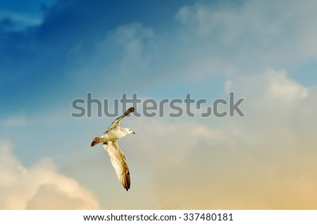 seagull in the sky with cloudy sky - stock photo