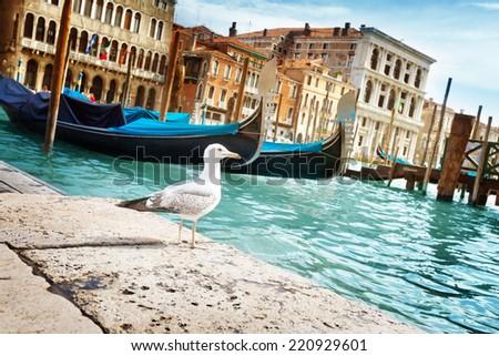 seagull in Venice, Italy - stock photo
