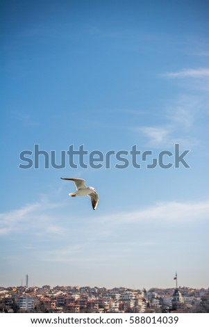 Seagull is  flying in sky over the sea waters