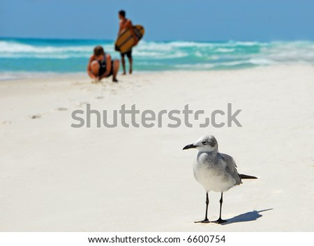Seagull Looking Bored with Kids Playing on Beach in Background - stock photo