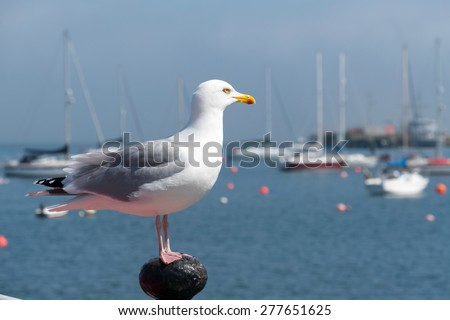 Seagull looking out to sea in Falmouth, Cornwall UK. - stock photo