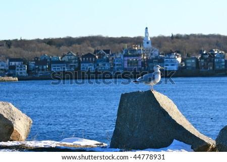 Seagull near Rockport Massachusetts - stock photo