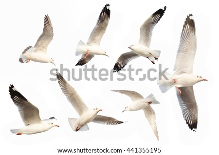 Seagull object on isolated - stock photo