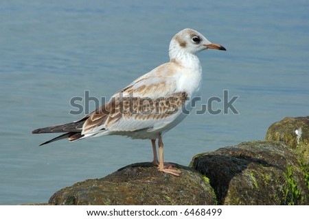 Seagull on a breakwater