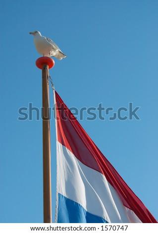 seagull on a dutch flag - stock photo
