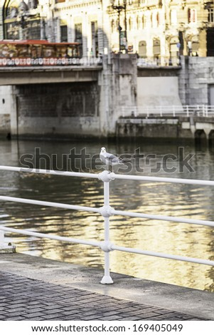 Seagull on a fishing pier in the city, detail of a bird in a seaport in urban area - stock photo