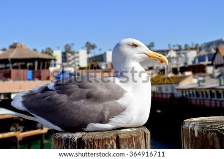 Seagull on a log. - stock photo