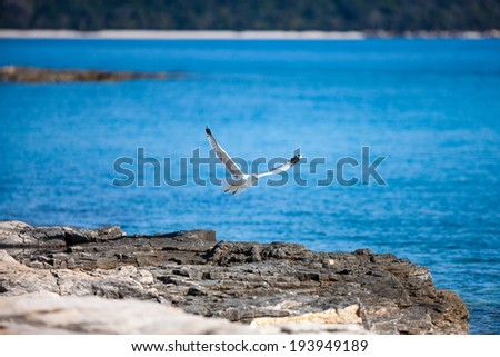 Seagull on a rock by the sea. - stock photo