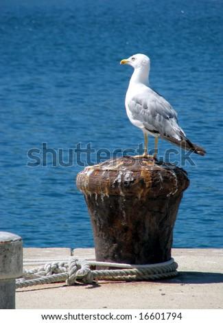 Seagull on dock pin - stock photo