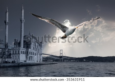 Seagull on front of Ortakoy mosque , Istanbul, Turkey ( selective focus seagull) - stock photo