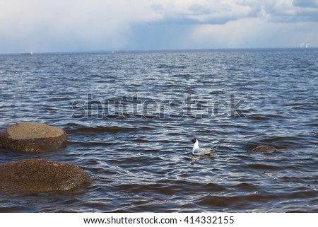 seagull on Gulf of Finland , St. Petersburg