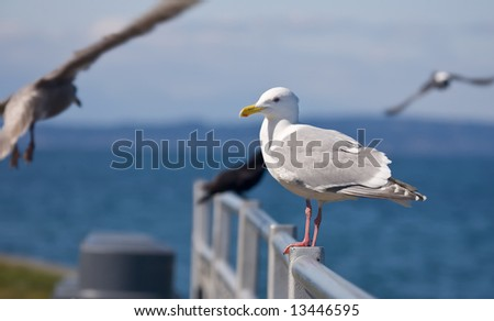 Seagull on metal railing by the sea - stock photo