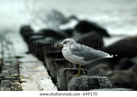 Seagull on Pier - stock photo